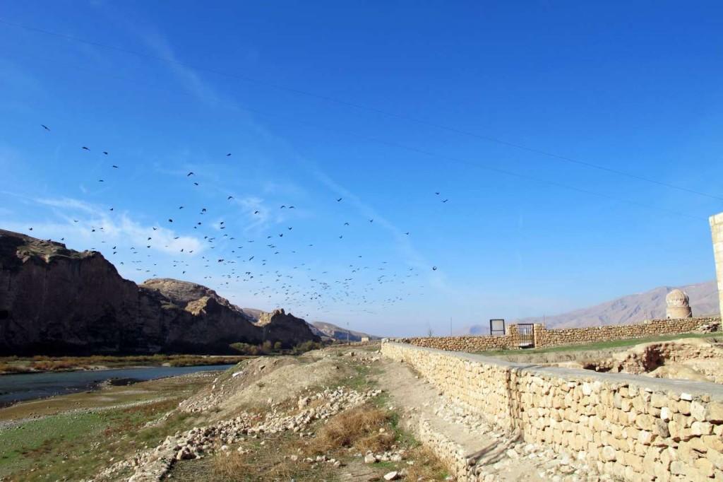 Kuşlar…(Fotoğraf: Bahar Koyuncu)